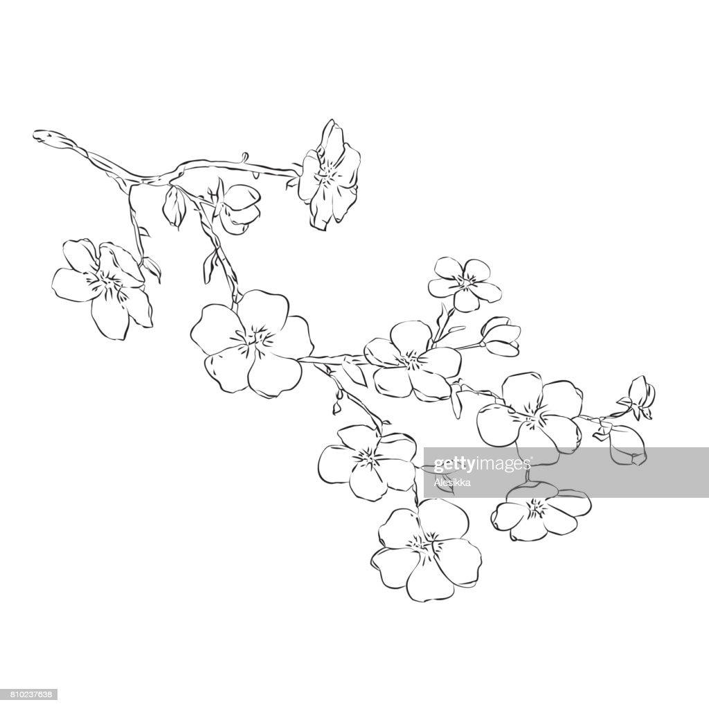 twig apple-tree blossoms