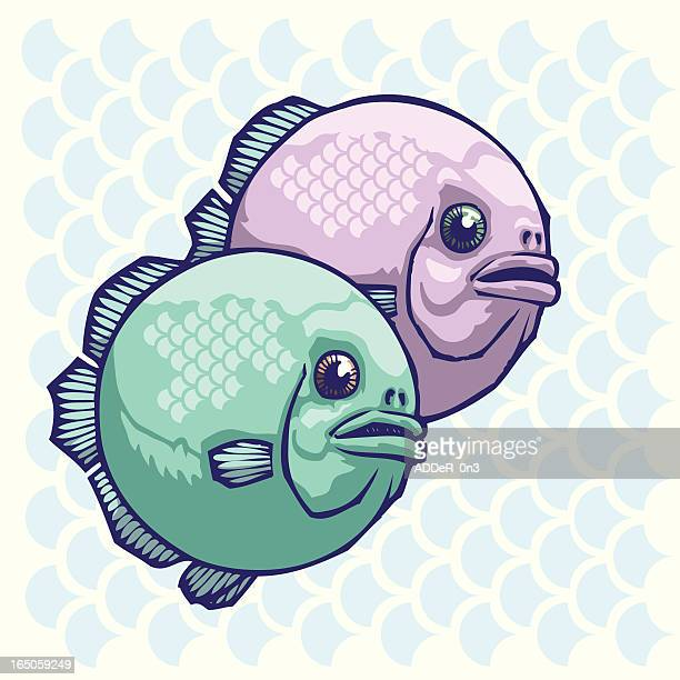 twin fin - animal scale stock illustrations, clip art, cartoons, & icons