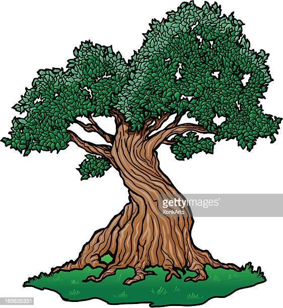 twisty tree - twisted stock illustrations, clip art, cartoons, & icons