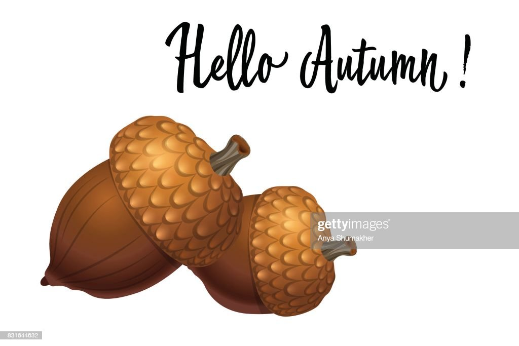 Two acorns isolated on white background. Vector Illustration