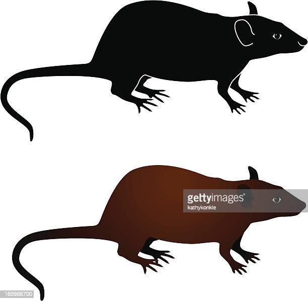 rat - 齧歯類点のイラスト素材/クリップアート素材/マンガ素材/アイコン素材