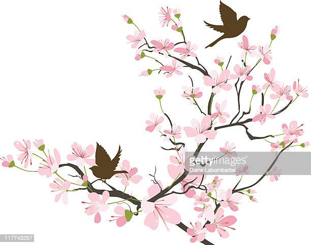 2 つのブラウンスパローズシルエットと桜のブランチ - 桜点のイラスト素材/クリップアート素材/マンガ素材/アイコン素材