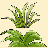 two cartoonish different green tropical plants bushes