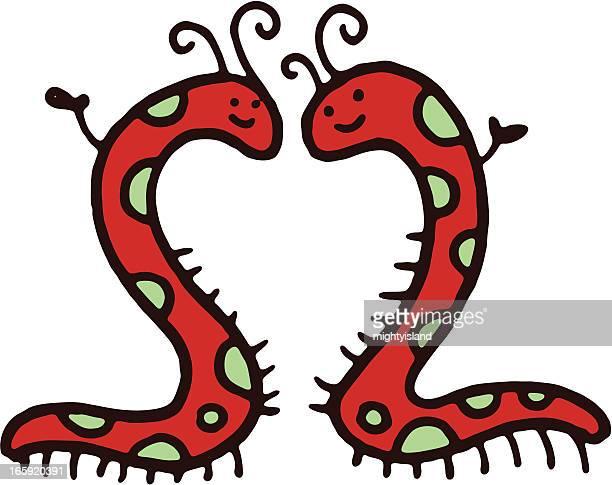 ilustrações de stock, clip art, desenhos animados e ícones de dois centipedes formando uma forma de coração - centopeia