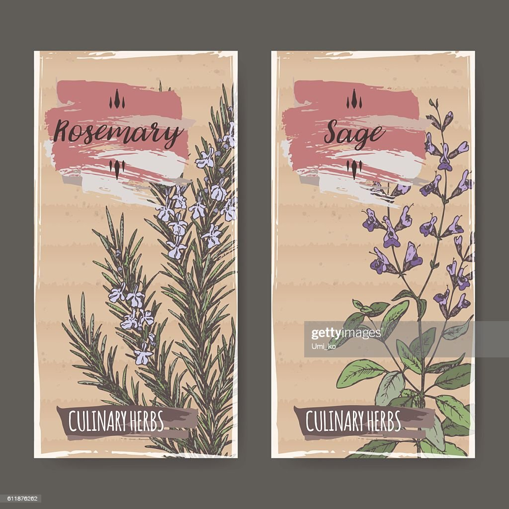 Two color labels with sage and rosemary sketch.