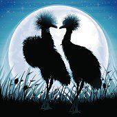 Two Crowned Cranes silhouettes safari in grass against blue moon