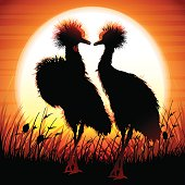 Two Crowned Cranes silhouettes safari in grass against hot sun