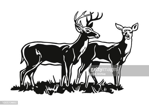 illustrations, cliparts, dessins animés et icônes de deux cerfs - biche