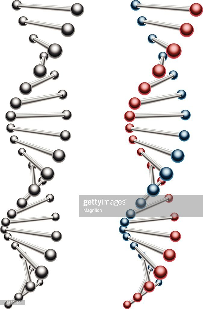 Two DNA helices one black and white one color