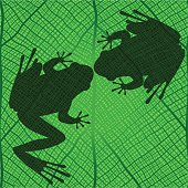 two frog on the green leaf