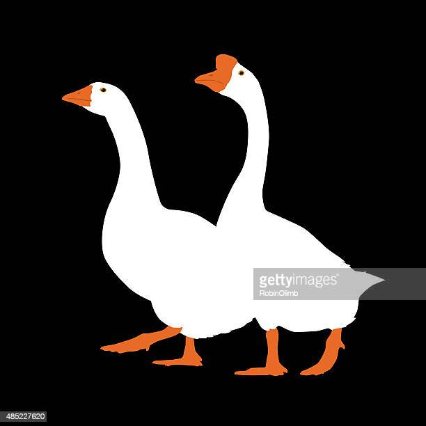 Two Geese Walking Together