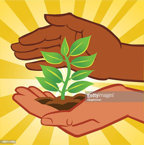 Two Hands Holding Small Plant - Tree