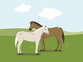 Two horses standing in the meadow vector cartoon illustration