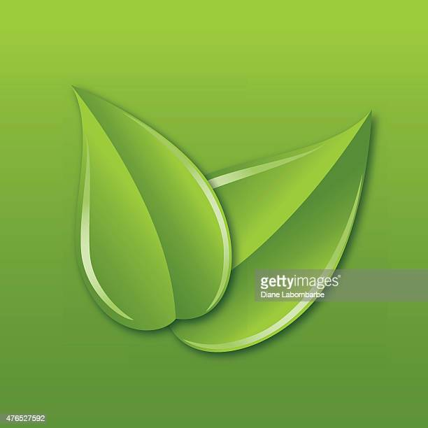 two leaves overlapping diagonally on a green square background - green tea stock illustrations, clip art, cartoons, & icons