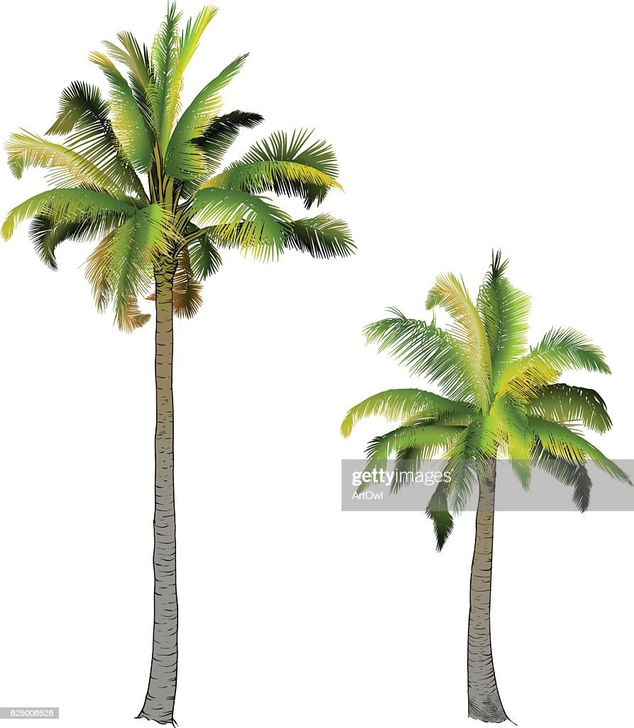 Two palm trees,