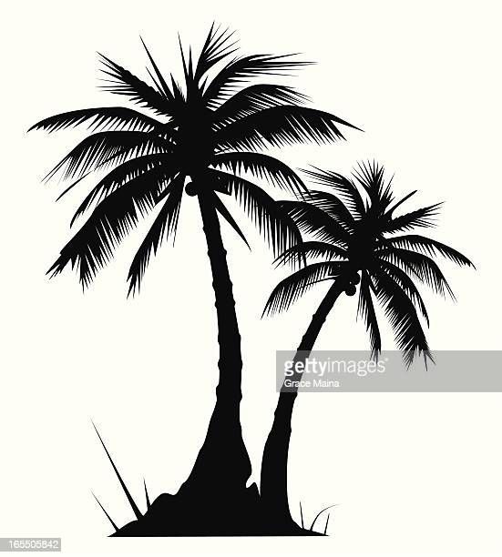 two palm trees - vector - coconut leaf stock illustrations, clip art, cartoons, & icons