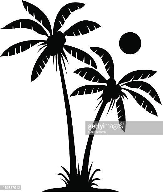 two palms in black and white - coconut palm tree stock illustrations, clip art, cartoons, & icons