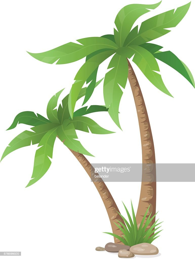 two palms tree isolated