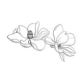 Two pink magnolia flowers, sketch vector illustration