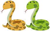 Two rattlesnakes on white background