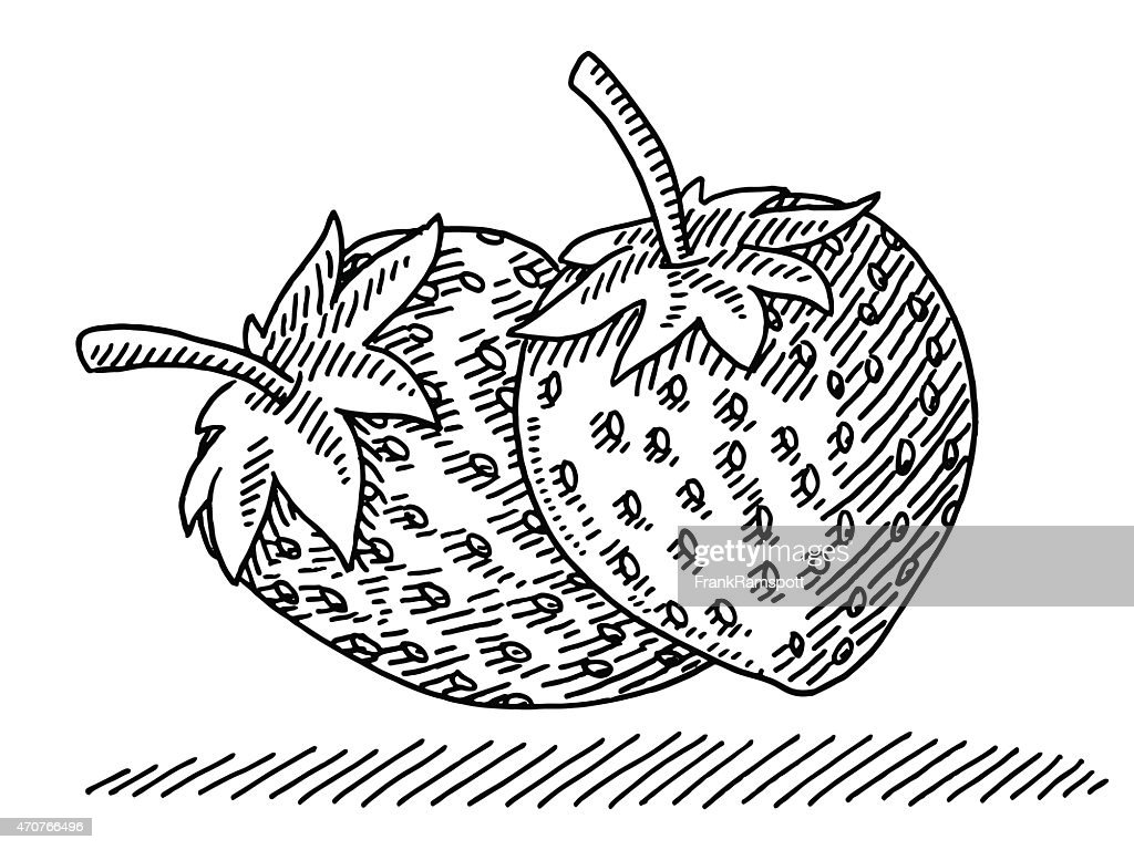 Two Strawberry Fruits Drawing High Res Vector Graphic Getty Images