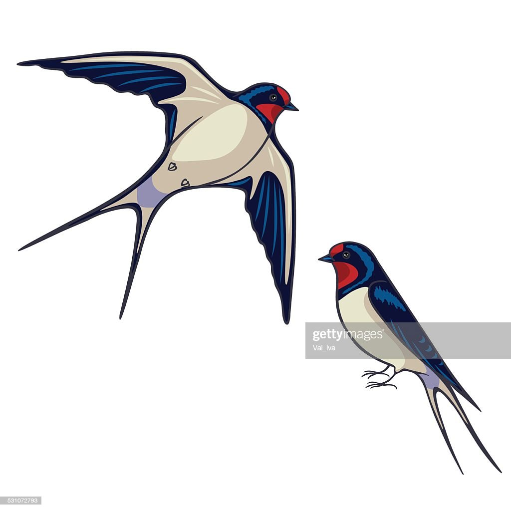 Two swallows