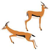 Two Thomson's gazelles