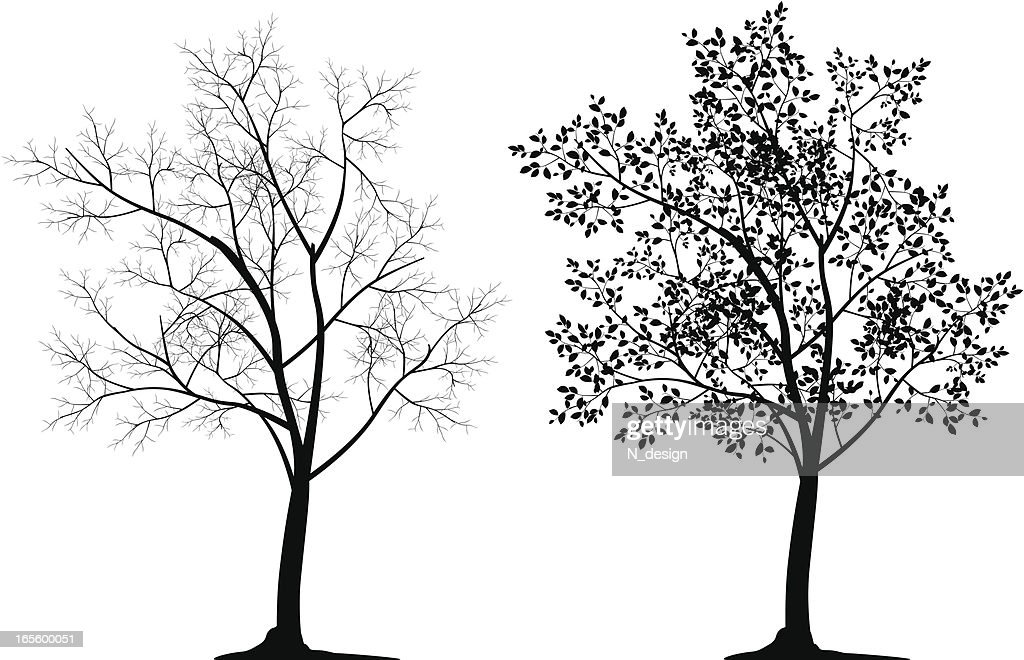 Two tree silhouettes in black on white background : stock illustration