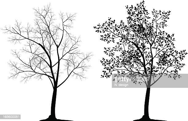two tree silhouettes in black on white background - bare tree stock illustrations