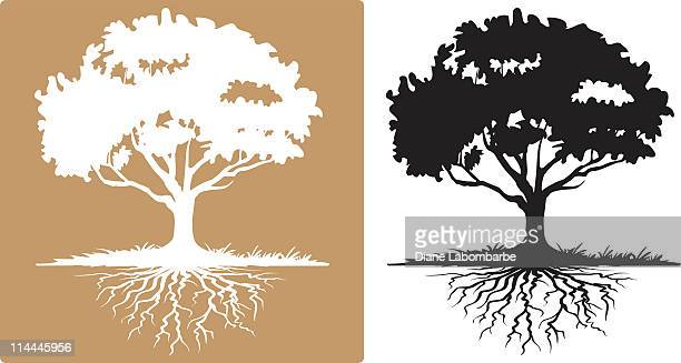 two tree with visible roots white and black silhouettes - root stock illustrations, clip art, cartoons, & icons