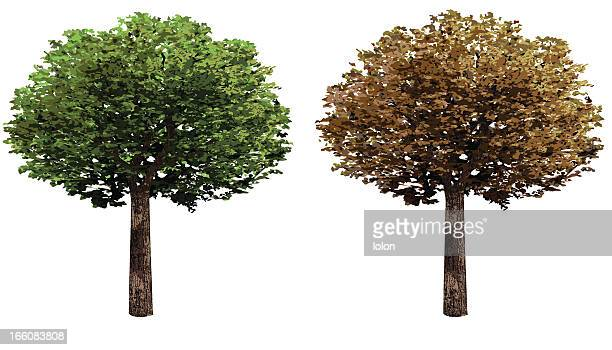 two trees design elements