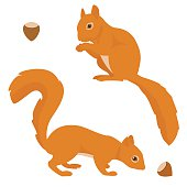 Two vector squirrels