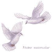 Two white doves flying next to each other