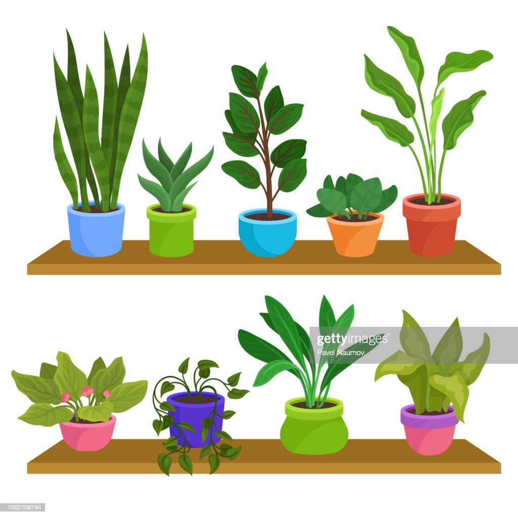 Two wooden shelves with various houseplants. Decorative indoor plants in ceramic pots. Natural elements for home decor. Flat vector design