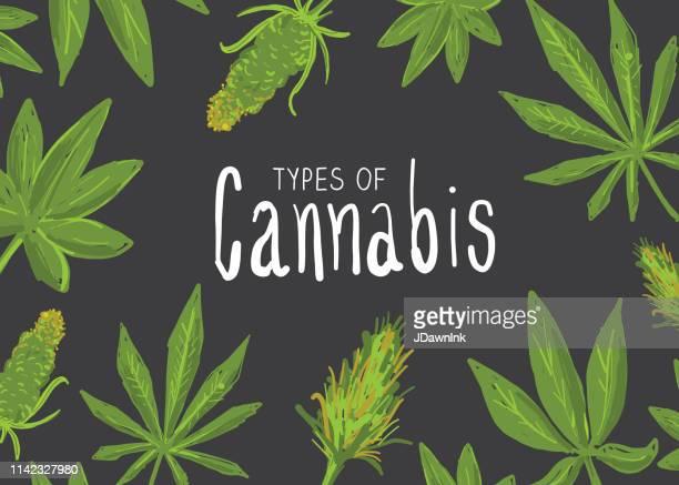 types of cannabis marijuana leaves icon set with text - cannabinoid stock illustrations