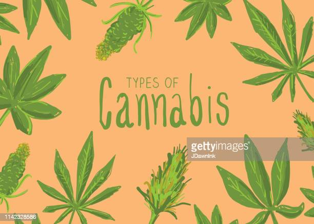 types of cannabis marijuana leaves icon set with text - marijuana leaf text symbol stock illustrations, clip art, cartoons, & icons