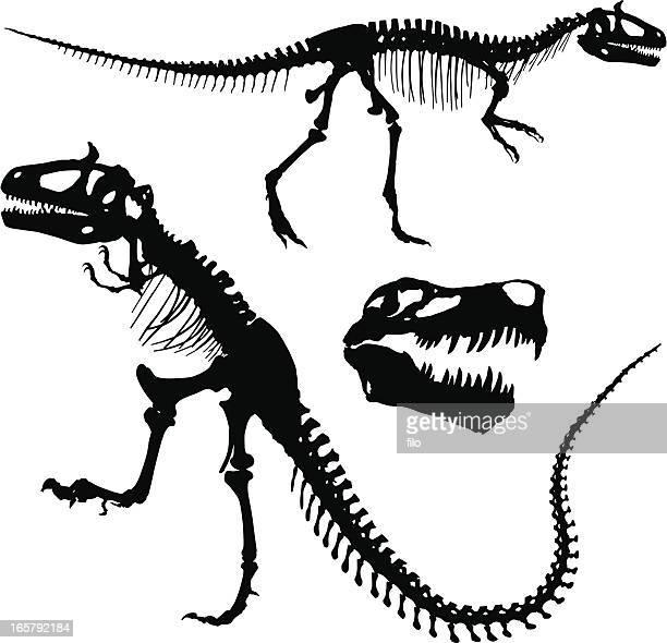 tyrannosaurus rex - animal skeleton stock illustrations, clip art, cartoons, & icons