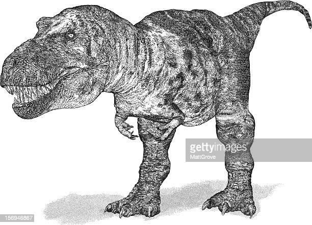 ilustrações de stock, clip art, desenhos animados e ícones de tiranossauro - dinossauro desenho