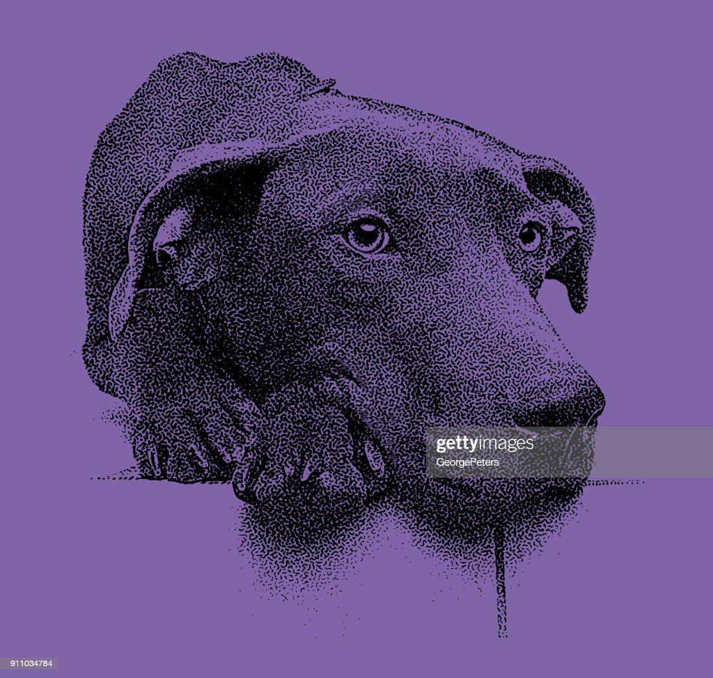 Ultra violet mezzotint of a sad Labrador Retriever