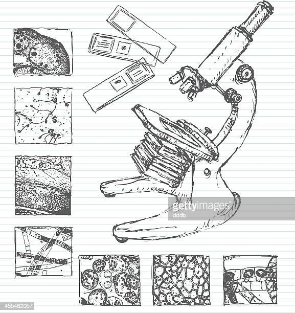 under a microscope doodle - human tissue stock illustrations