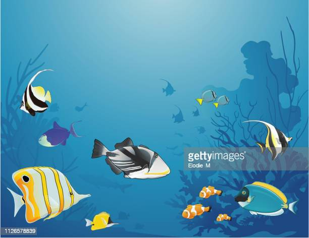 under the sea/sous la mer - acanthuridae stock illustrations, clip art, cartoons, & icons