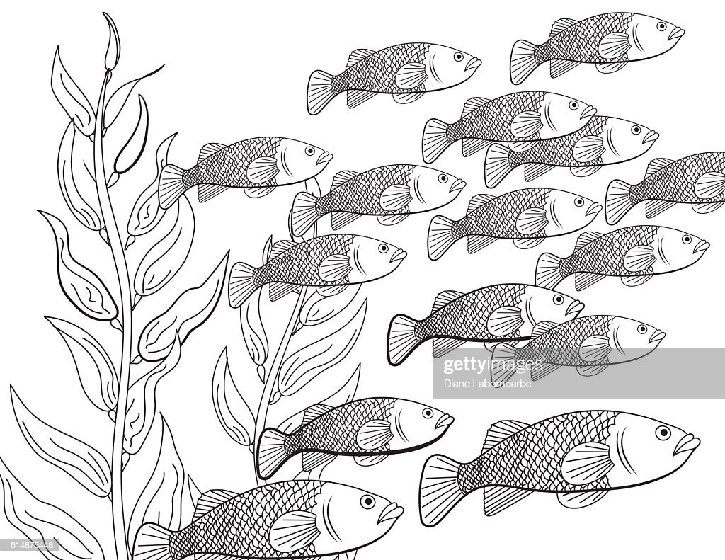 Underwater School Of Fish Adult Coloring Book Page Vector Art