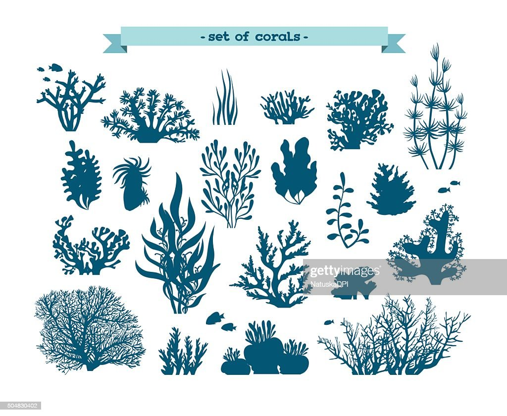 Underwater set of corals and algaes.