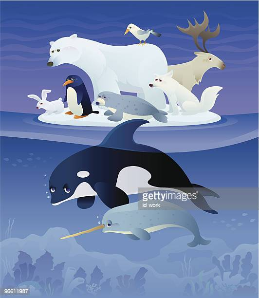 unhappy polar animals - killer whale stock illustrations, clip art, cartoons, & icons
