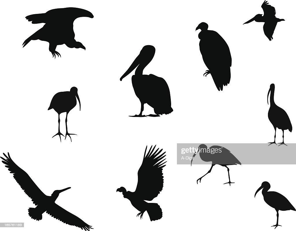 Unique Birds Vector Silhouette