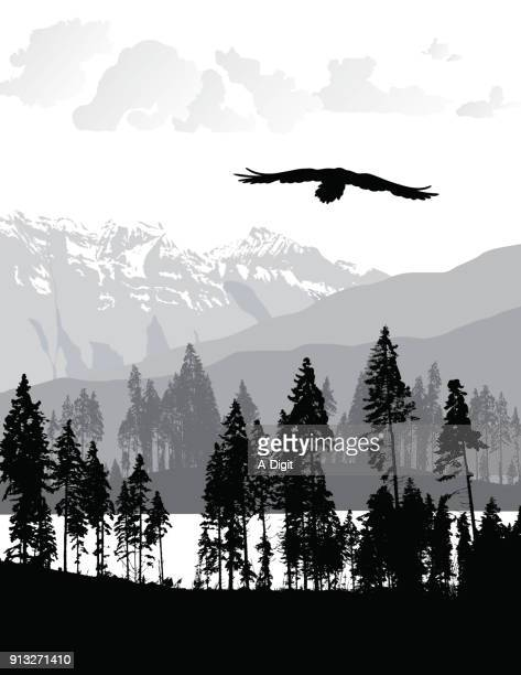 untouched wilderness - eagle bird stock illustrations, clip art, cartoons, & icons