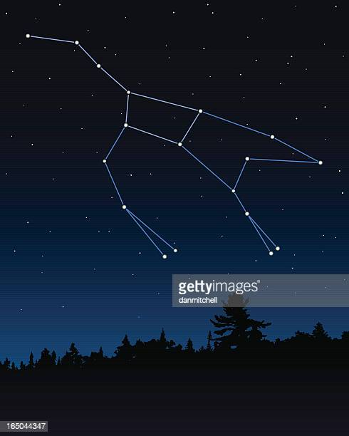 Ursa Major (The Great Bear) Constellation