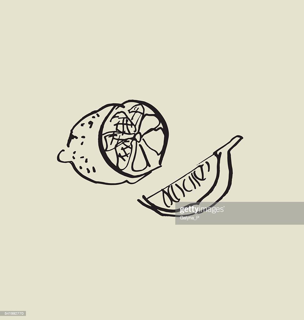 сut lemon image. food hand drawn sketch vector illustration.