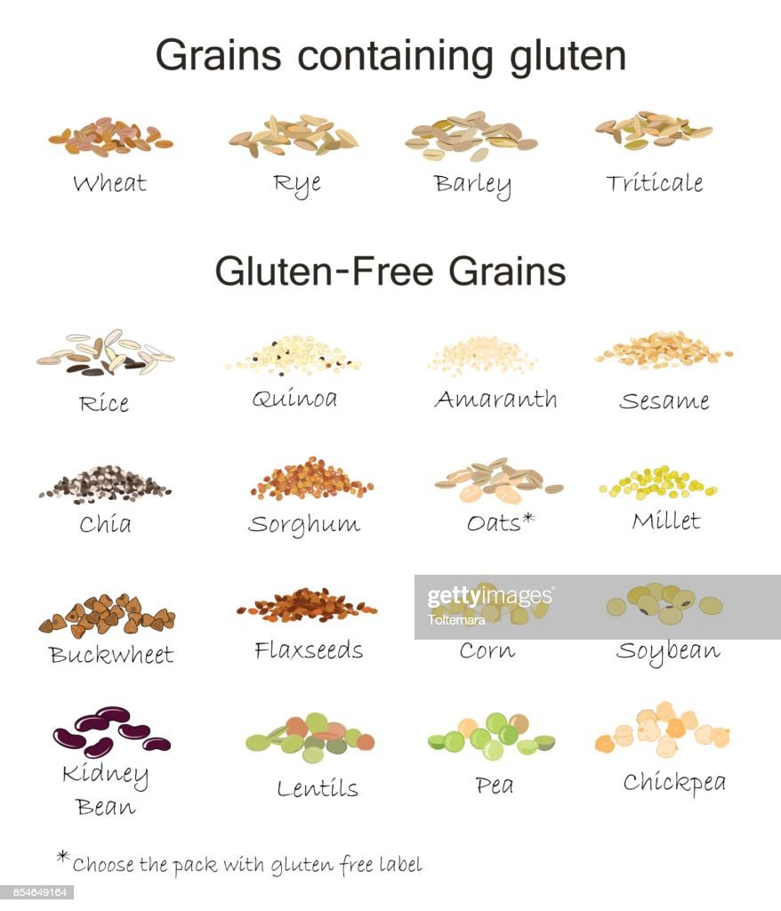 A variety of gluten free and containing gluten grains. Wheat, barley, oats, rye, buckwheat, amaranth, rice, millet, sorghum, quinoa, chia seeds, flax seeds, sesame, oatmeal, legumes. Vector isolated