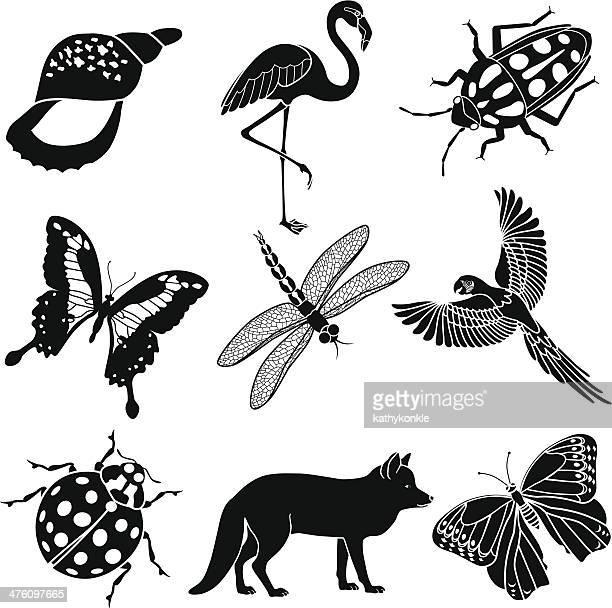 Divers animaux, oiseaux et insectes